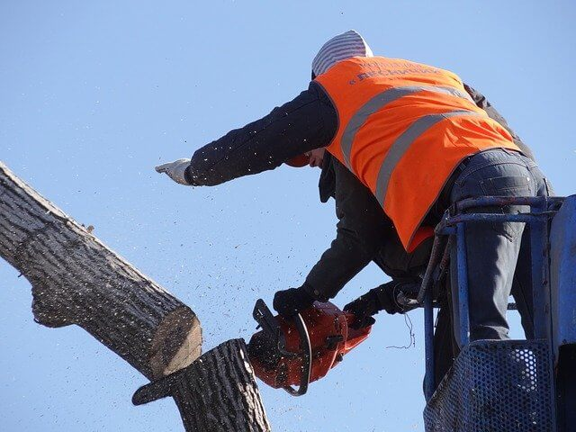 never do this when cutting down a tree